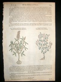 Gerards Herbal 1633 Hand Col Botanical Print. Trefoil, Spanish Hare-Foot